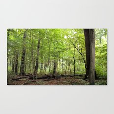 Transience in the Forest 2 Canvas Print