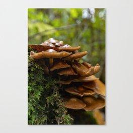 Tree mushroom Canvas Print