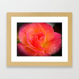 Spring Showered Rose Framed Art Print