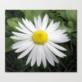 White composite flower Canvas Print