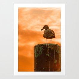 Seagull dreams Art Print