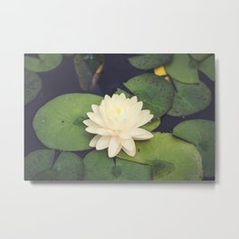 Peaceful Water Lily Metal Print