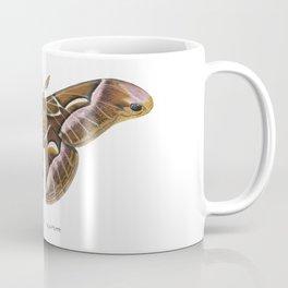 Ailanthus Silkmoth (Samia cynthia) Coffee Mug