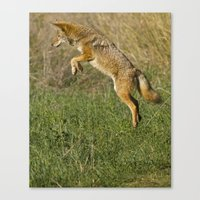 coyote Canvas Prints featuring Coyote by Debbie Maike Photography