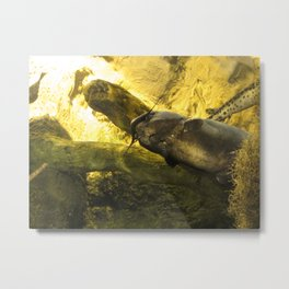 Catfish Metal Print