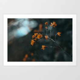 Small Orange Flowers Art Print