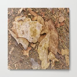 Bark on the forest floor Metal Print