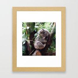 Cute Koala relaxing in a Tree Framed Art Print