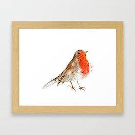 Rocky Robin Framed Art Print