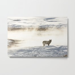 Yellowstone National Park - Wolf and Hot Spring Metal Print