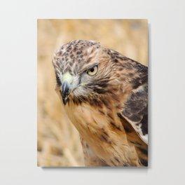 Red Kite Metal Print