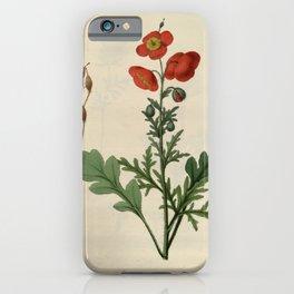 Flower meconopsis aculeata3 iPhone Case