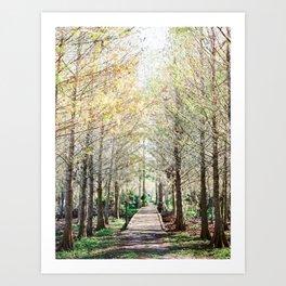 Enchanting Florida Cypress Forest Boardwalk - Fine Art Photography Art Print