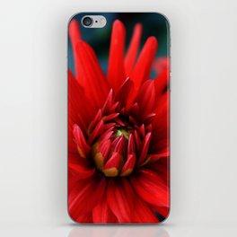 Fire red dahlia iPhone Skin