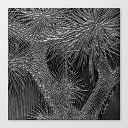 Joshua Tree Plata by CREYES Canvas Print