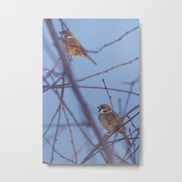 Assured In Next Day Sparrows Metal Print