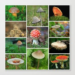 Mushrooms Collage - Cafe or Kitchen Decor Canvas Print