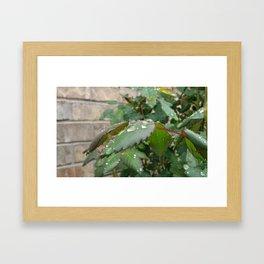 Aqua Rose Framed Art Print