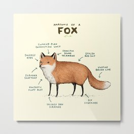 Anatomy of a Fox Metal Print