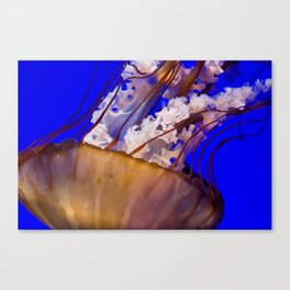 Stinging Beauty Canvas Print