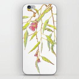Flowering eucalyptus tree branch iPhone Skin