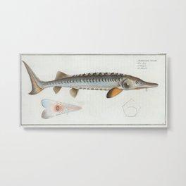 Vintage Illustration of a Sturgeon Fish (1785) Metal Print