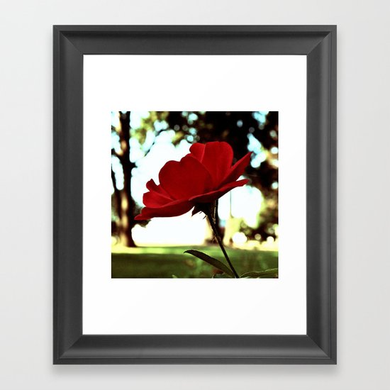 Autumn red rose Framed Art Print