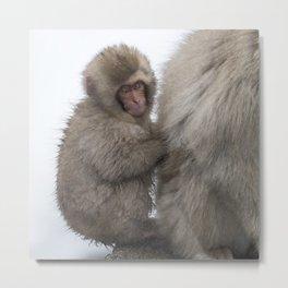 Baby Snow Monkey Hitchin' a Ride Metal Print