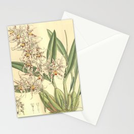 Flower 8097 odo naevium Stationery Cards