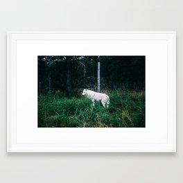 The White Wolf Framed Art Print