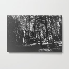 Up in the Woods / Boulder, CO Metal Print