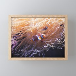 Clownfish in Anemone Framed Mini Art Print