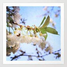 Cherry Blossom & Bee Art Print