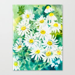 Chamomile Flowers, Herval design Field flowers wild flowers floral art Canvas Print