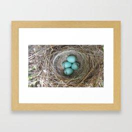 Cardinal bird nest Framed Art Print