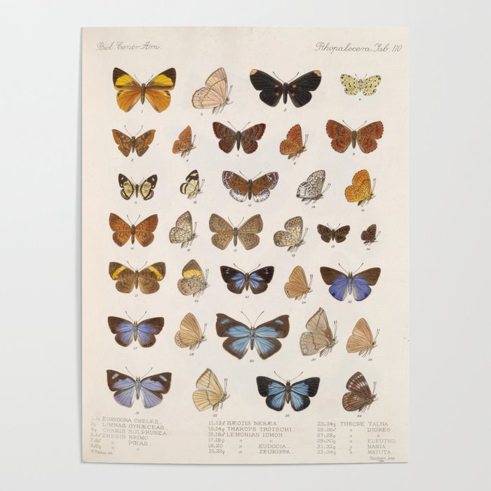 Vintage Scientific Insect Butterfly Moth Biological Hand Drawn Species Art Illustration Poster