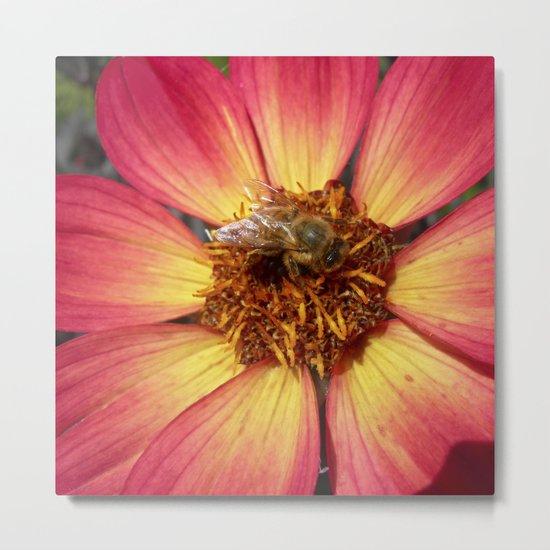 wild bee macro VIII Metal Print