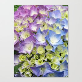 AZISAI/紫陽花 Canvas Print