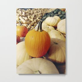 Freshly picked assortment of fall pumpkins and squash Metal Print