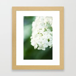 Softly Endearing - Hydrangia in Green Framed Art Print