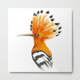 Hoopoe colourful bird Metal Print