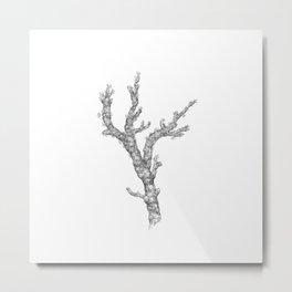 Red coral - corallium rubrum  - black and white Metal Print