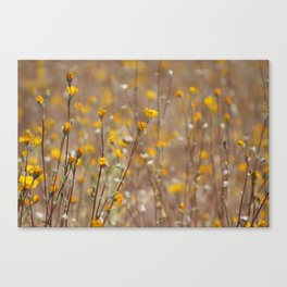 Little Drops of Sunshine Coachella Valley Wildlife Preserve Canvas Print