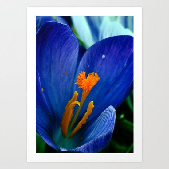 Springtime Bloom Art Print
