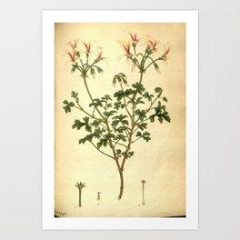 Flower geranium fragile Brittle stalked Geranium Art Print