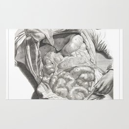 Human Anatomy Art Print LIVER STOMACH COLON Vintage Anatomy, doctor medical art, Antique Book Plate Rug