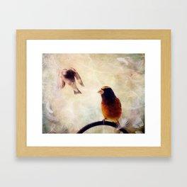 Evening Grosbeaks Framed Art Print