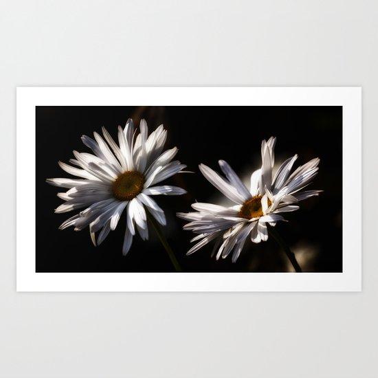 Daisy flowers Art Print