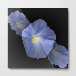 Morning Glory Illusion On Black Metal Print