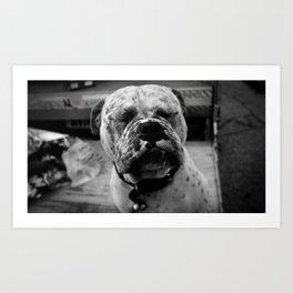 Pensive Bulldog Art Print